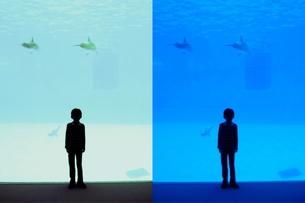 泳ぐイルカ 空飛ぶイルカの写真素材 [FYI00136529]