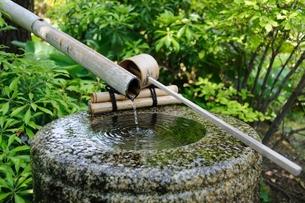 湧き水の写真素材 [FYI00136597]