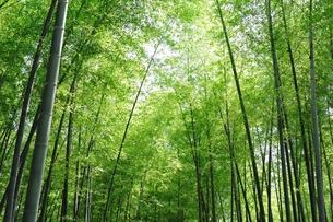 竹林の写真素材 [FYI00136608]