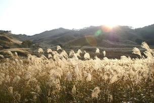 高原のすすきの写真素材 [FYI00137094]