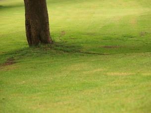 芝生の写真素材 [FYI00137325]