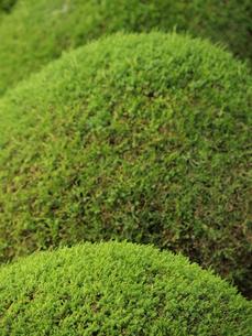 新緑の木々の写真素材 [FYI00137380]