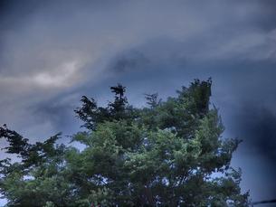 風に揺れる木々の写真素材 [FYI00137469]