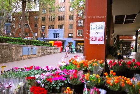 街の花屋の素材 [FYI00137652]