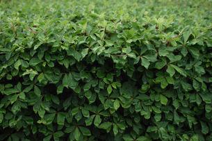 Green plants01の写真素材 [FYI00137701]