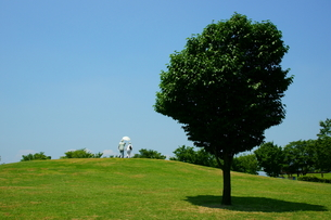 丘の一本木そして青空の写真素材 [FYI00138063]
