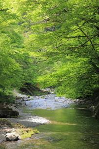 新緑の渓谷の写真素材 [FYI00138949]