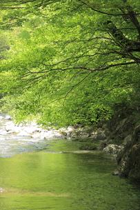 新緑の渓谷の写真素材 [FYI00138957]