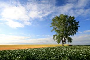 哲学の木の写真素材 [FYI00138959]