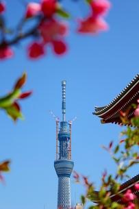 浅草寺から見るスカイツリーの写真素材 [FYI00139021]