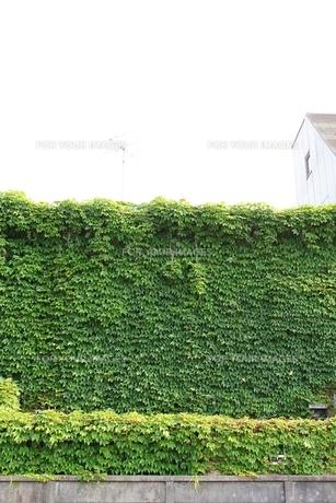 緑のカーテンの素材 [FYI00139148]