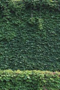 緑のカーテンの素材 [FYI00139150]