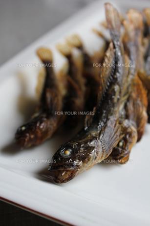 川魚料理/カジカの串焼きの写真素材 [FYI00139254]