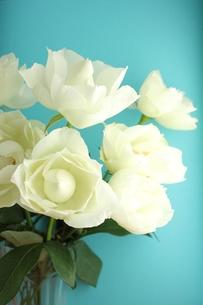 白いバラの写真素材 [FYI00139399]