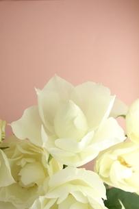 白いバラの写真素材 [FYI00139416]