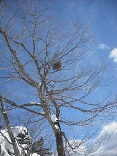 冬の空と樹の写真素材 [FYI00139661]