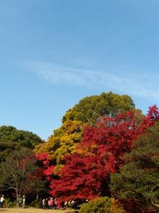 晩秋の六義園と観光客と秋空の写真素材 [FYI00139670]