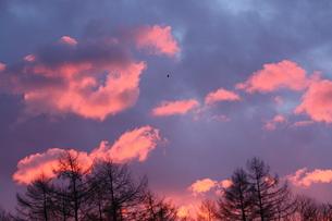 朝焼けの空の写真素材 [FYI00139675]