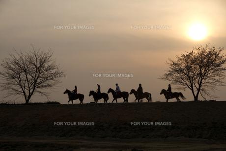 馬と夕焼けの写真素材 [FYI00139700]