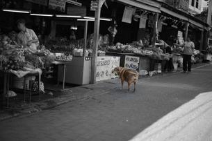 海外旅行 犬のあくびの写真の写真素材 [FYI00139714]