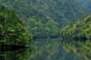 湖面に写り込む緑の写真素材 [FYI00139889]
