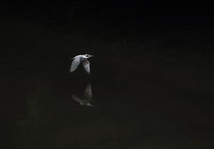 ヤマセミの写真素材 [FYI00140319]