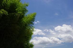 夏空と竹林の写真素材 [FYI00140882]