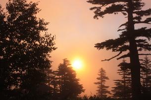 夏の霧中の朝日の写真素材 [FYI00140912]