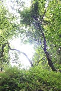 初夏の緑の写真素材 [FYI00140965]