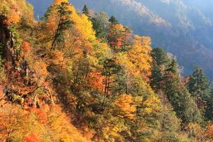 山の紅葉の写真素材 [FYI00141007]