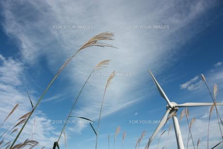 秋の空とススキと風車の素材 [FYI00141033]