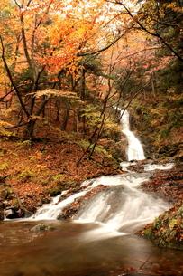 秋の裏見の滝の写真素材 [FYI00141051]