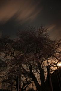 月夜の庄川桜の写真素材 [FYI00141077]