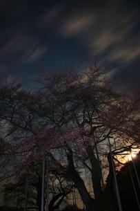 夜桜と月の写真素材 [FYI00141091]