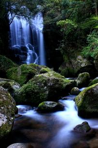 初夏の桑の木の滝の写真素材 [FYI00141120]