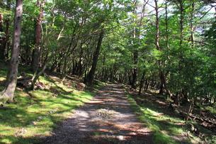 木漏れ日と散策路の写真素材 [FYI00141846]