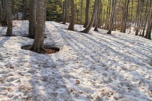 春のブナ林の写真素材 [FYI00142068]