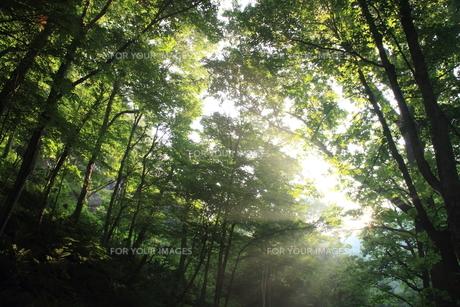 森と光芒の素材 [FYI00142121]