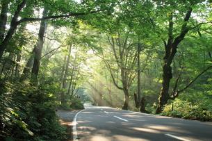 森と光芒と道路の素材 [FYI00142122]