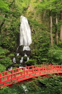 夏の不動の滝の写真素材 [FYI00142127]