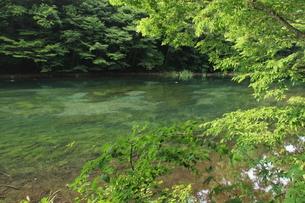 夏の奥入瀬渓流の素材 [FYI00142130]
