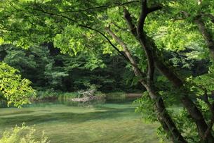 夏の奥入瀬渓流の素材 [FYI00142136]