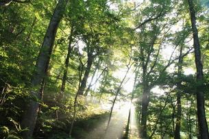 夏の森と光芒の素材 [FYI00142142]