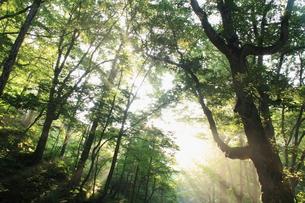夏の森と光芒の素材 [FYI00142143]