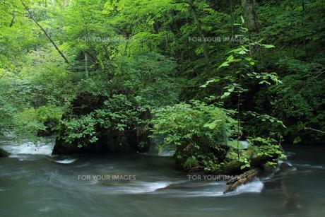 夏の奥入瀬渓流の素材 [FYI00142155]