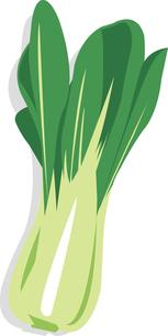 青梗菜の写真素材 [FYI00142324]