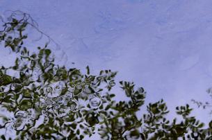 水面に映る緑の写真素材 [FYI00142492]