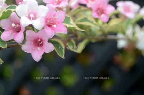 花の季節の写真素材 [FYI00142498]