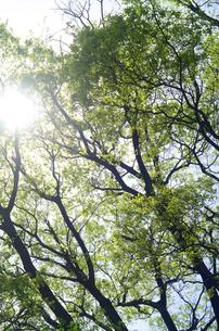 新緑の森の写真素材 [FYI00142499]