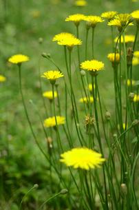 群生植物の写真素材 [FYI00142515]